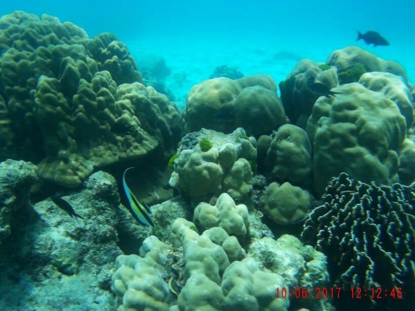 Coral Racha Noi