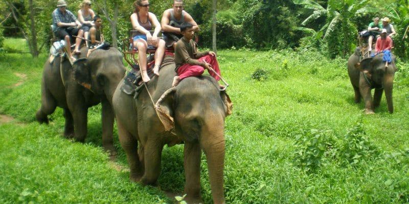 Phupa Elephant Trekking Phuket D3
