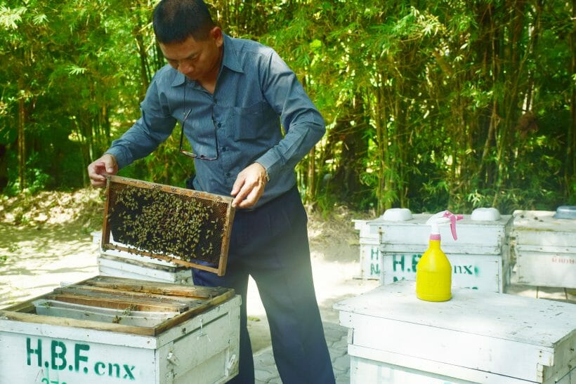 Honey Bee Farm Phuket