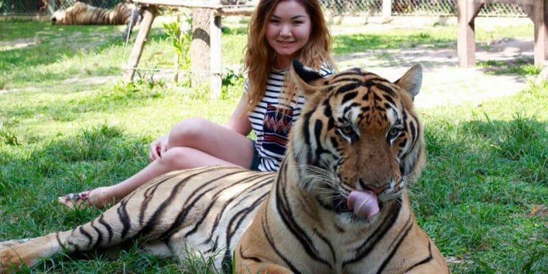 tigers kingdom phuket