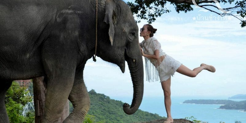 Elephant Lover Kamala by Changhai Phuket