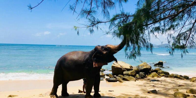 Kamala Elephant Bareback Riding Phuket B3