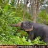 Elephant Lover Kamala by Changhai Phuket