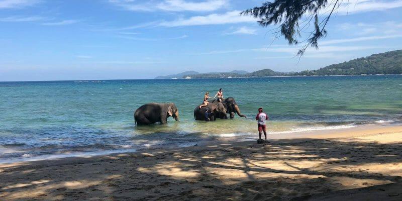 Kamala Elephant Riding & Bathing Phuket BS3