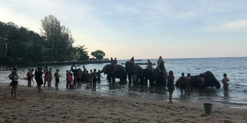 Kamala Elephant Bareback Riding Phuket B1