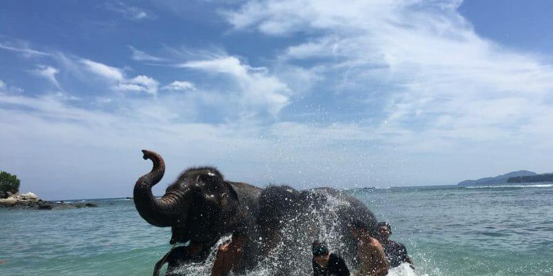 Kamala Elephant Trekking & Bathing Phuket A4