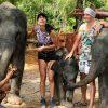 Elephant Care Program 90 Mins Phuket