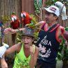 Phuket Animals