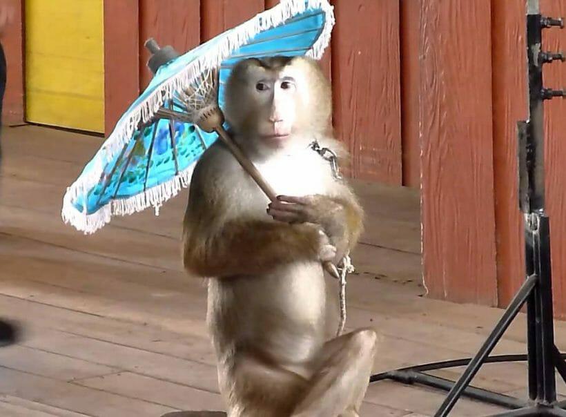 Monkey show Phuket