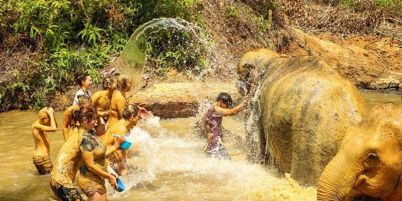 Bathing Elephants Phuket