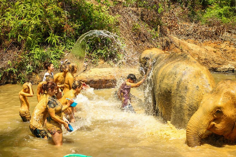 Bathing Elephants Phuket