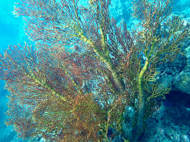 Early Bird Maya Bay & Paradise Island
