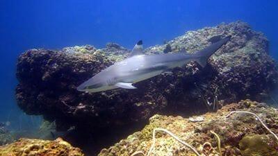 Scuba Diving Phuket Phi Phi Island