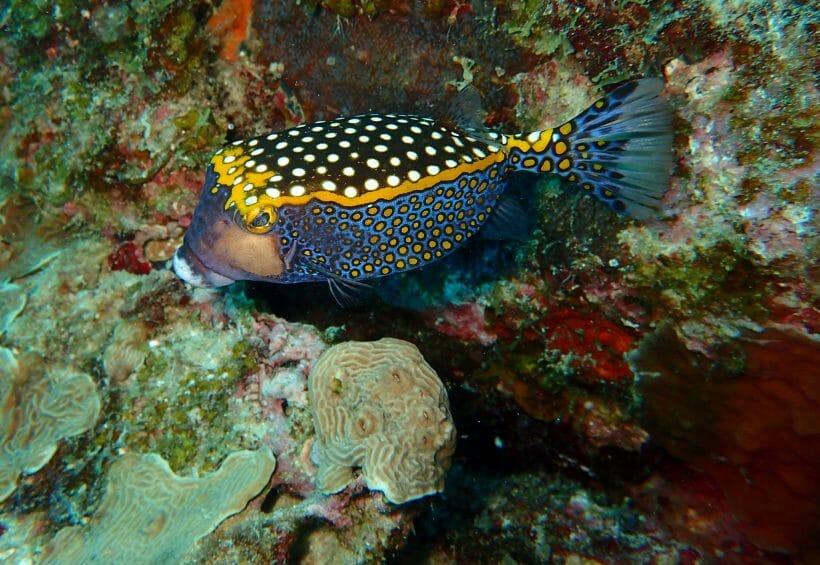 PADI Diving Course in Phuket