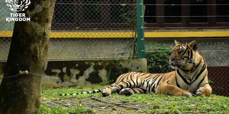 Walk Around The Park Tiger Kingdom