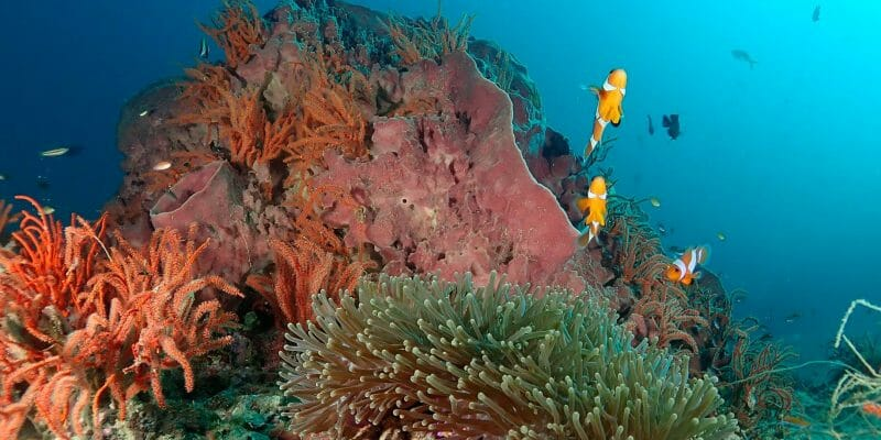 Phuket Scuba Diving Review