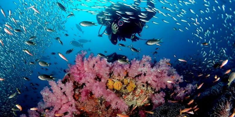 PADI Diving Course Phuket