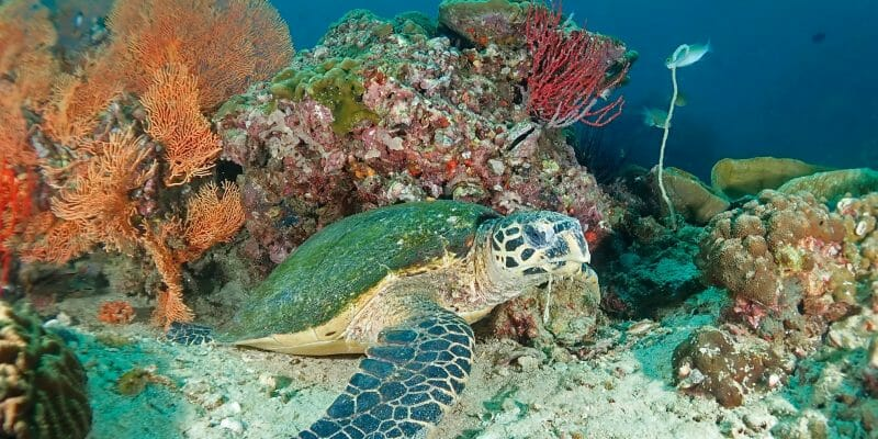 Premium PADI Diving Course Phuket