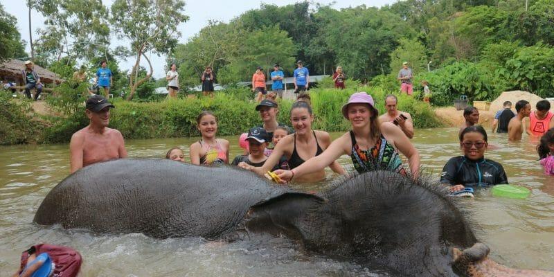 Phuket Elephant Care