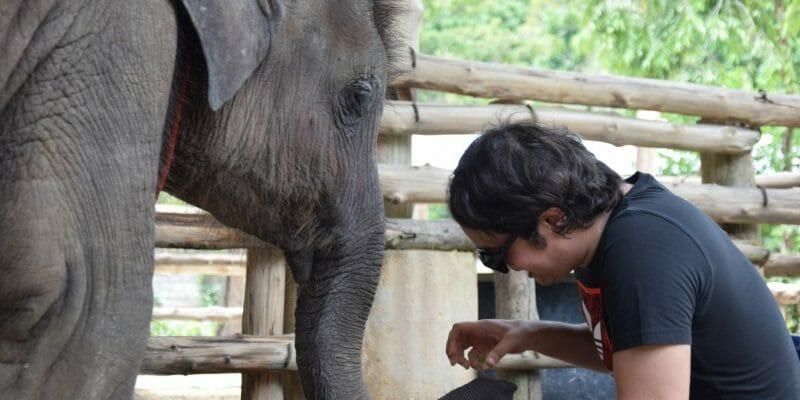 Feeding Elephant Phuket