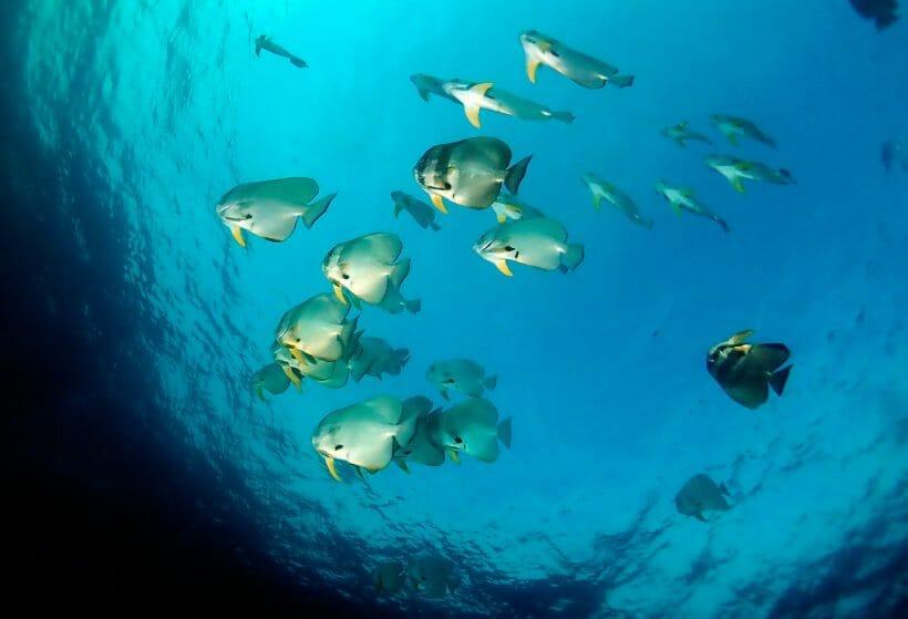Scuba Diving Phuket