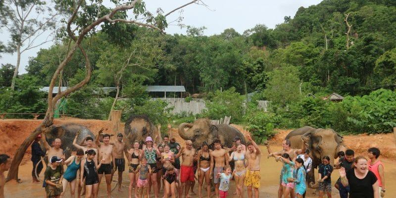 Elephant Care Phuket
