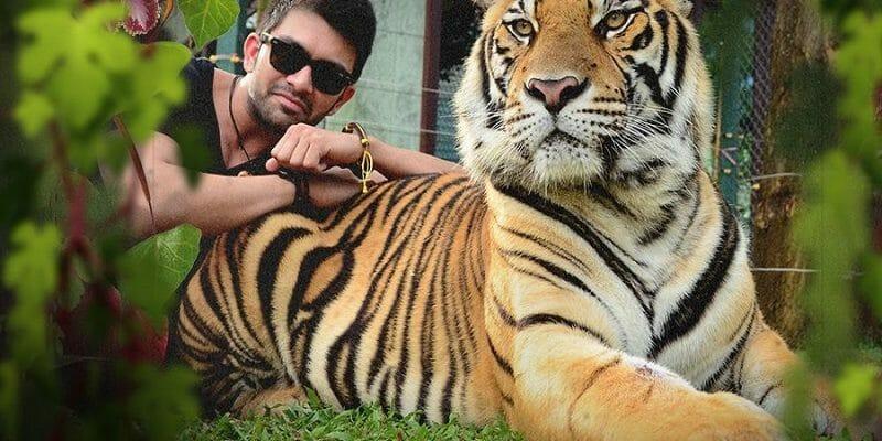 Take 4 Tiger Kingdom Phuket