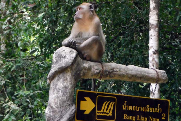 monkey-on-a-sign