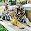 Big Tiger Kingdom Phuket