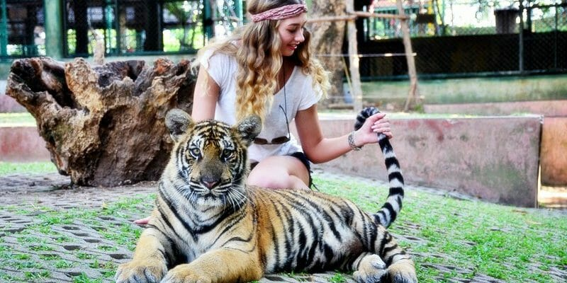 Take 2 Tiger Kingdom Phuket