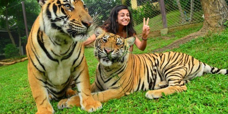 Big Tiger Kingdom Phuket